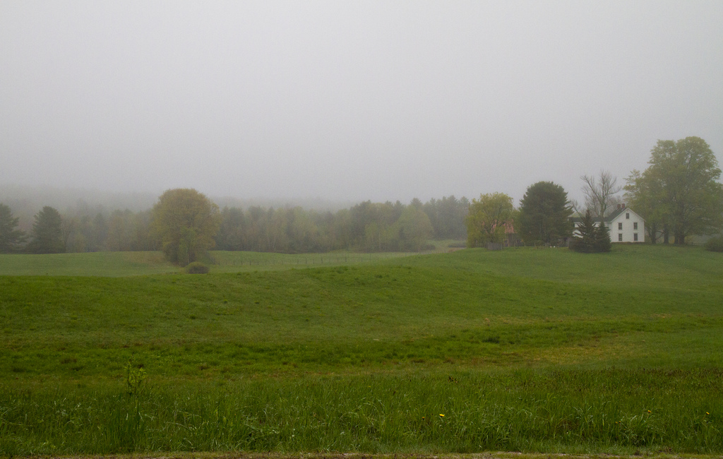 The neighbor's fields, at home in Maine.